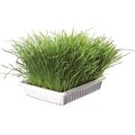 Trixie Mjukt Kattgräs Vitaminberikat ca 100 g